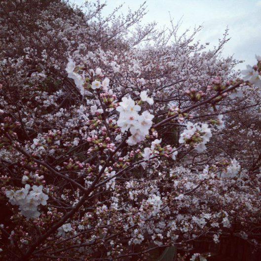 Spring Time in Japan.......