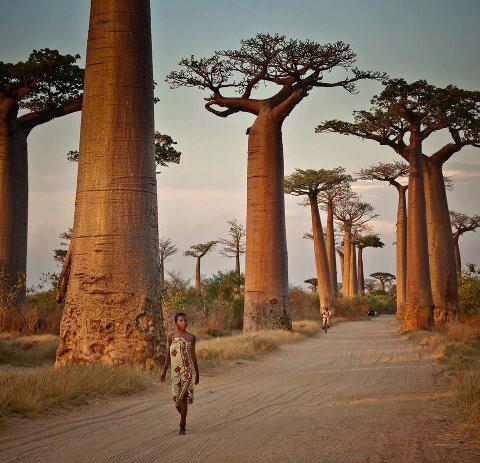 The Impressive Africa